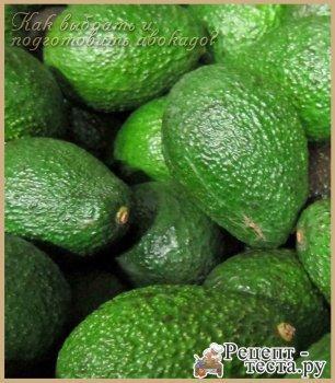 Как выбрать и подготовить авокадо?